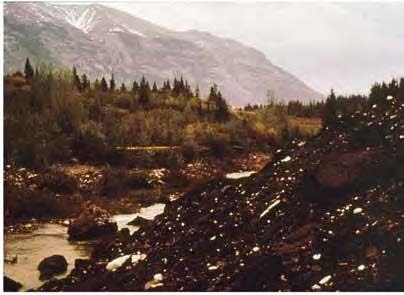 The Reclamation of Canmore Creek—An Example of a Successful